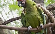 Dschungel auf Sumatra erleben